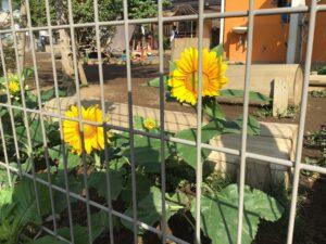 お花が咲いたよ